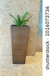 pot of plant interior in... | Shutterstock . vector #1016073736