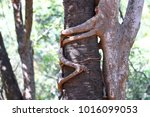 two trees embracing each other...   Shutterstock . vector #1016099053