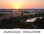 sunrise in swamp kemeri latvia    Shutterstock . vector #1016125348