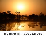 trees silhouettes at swamp   Shutterstock . vector #1016126068