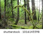 Tree Arch Covered In Moss