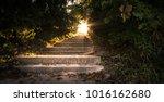 sunbeams through the forest.... | Shutterstock . vector #1016162680