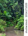 rainforest creek  atherton... | Shutterstock . vector #1016171020