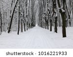 winter landscape after a... | Shutterstock . vector #1016221933