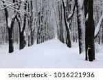 winter landscape after a... | Shutterstock . vector #1016221936