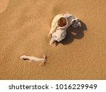 Animal Skull On Desert Sand