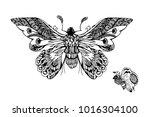 butterfly graphic art | Shutterstock .eps vector #1016304100