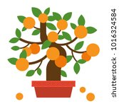 chinese orange bonsai tree ... | Shutterstock .eps vector #1016324584