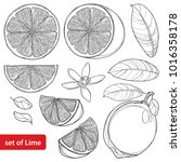 vector set with outline lime... | Shutterstock .eps vector #1016358178