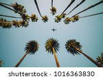 view of palm trees  sky and... | Shutterstock . vector #1016363830