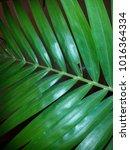 areca palm leaf   Shutterstock . vector #1016364334