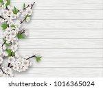 spring blooming cherry branch... | Shutterstock . vector #1016365024