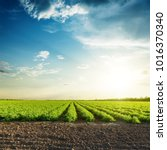 Small photo of green agriculture fields and sunset in blue sky with clouds