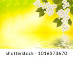 spring landscape with delicate... | Shutterstock . vector #1016373670