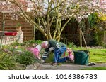 seasonal garden work at home... | Shutterstock . vector #1016386783