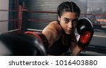 close up of a female boxer... | Shutterstock . vector #1016403880