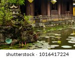 Beautiful Pond With Lotus...