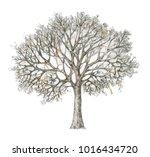 winter tree handdrawing... | Shutterstock . vector #1016434720