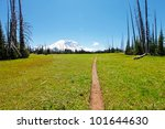 """Mount Rainier trail and hike in State Washington. Volcano and green meadow with blue sky in the middle of August. """"Grand Park via Lake Eleanor""""- hike. - stock photo"""