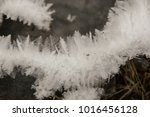 Frosty Ice Ferns