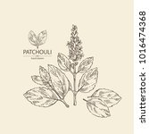patchouli  patchouli branch...   Shutterstock .eps vector #1016474368