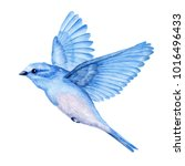 cute little blue bird.... | Shutterstock . vector #1016496433