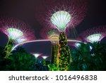supertree grove forest... | Shutterstock . vector #1016496838