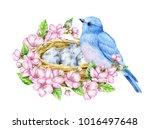 cute little blue bird with nest ... | Shutterstock . vector #1016497648