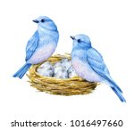 Stock photo cute little blue birds with nest and blue eggs watercolor illustration cute animals and birds 1016497660