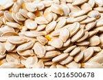 group raw pumpkin seeds as... | Shutterstock . vector #1016500678