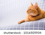 cute red cat   Shutterstock . vector #1016505934