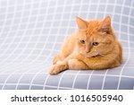 cute red cat   Shutterstock . vector #1016505940