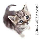 Stock photo little baby kitten looking upwards top view 101654053