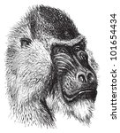 africa,african,ancient,animal,ape,artwork,baboon,background,black,creature,cynocephalus mormon,drawing,drawn,endangered,engraved
