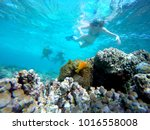 snorkeling in a clear blue... | Shutterstock . vector #1016558008