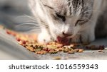 street cat as background   the... | Shutterstock . vector #1016559343