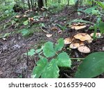 Mushroom In The Forest....