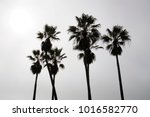 palm tree silhouettes. a cloudy ... | Shutterstock . vector #1016582770