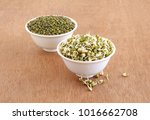 Small photo of Sprouted moong, mung or green gram, organic type, a healthy vegetarian food in bowl, and in the background is a bowl of regular moong.