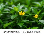 closeup of flower | Shutterstock . vector #1016664436