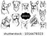 dog face hand drawn set. vector ... | Shutterstock .eps vector #1016678323
