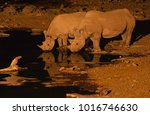 a black rhino mother and calf... | Shutterstock . vector #1016746630