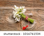 beautiful bouquet of snowdrops | Shutterstock . vector #1016761534