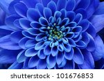 beautiful blue flower image for ... | Shutterstock . vector #101676853