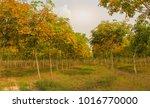 beautiful autumnal park rubber  ...   Shutterstock . vector #1016770000