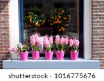 Flowers Of Pink Hyacinth And...