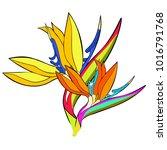 strelitzia bird of paradise... | Shutterstock .eps vector #1016791768