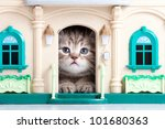 Stock photo small kitten sitting in toy house 101680363