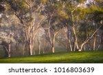 adelaide hills  south australia   Shutterstock . vector #1016803639