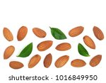 almonds with leaves isolated on ... | Shutterstock . vector #1016849950